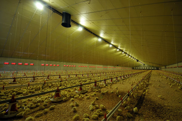 eurothane al quattro Heat-insulation systems for animal farms and agricultural buildings